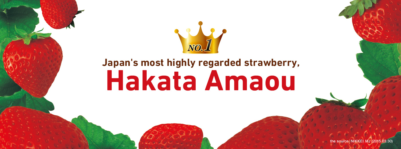 Japan's most highly regarded strawberry, Hakata Amaou